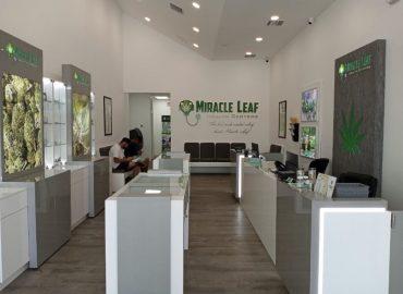 Miracle Leaf Louisiana